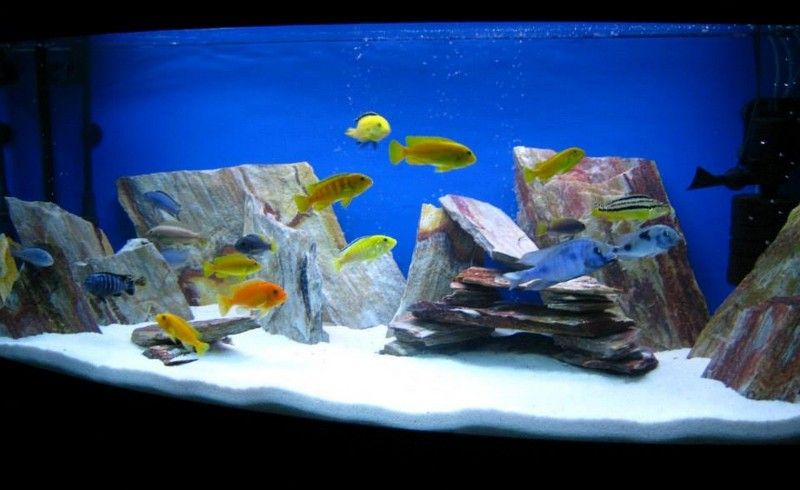 Can Natural Rock Be Used In An Aquarium